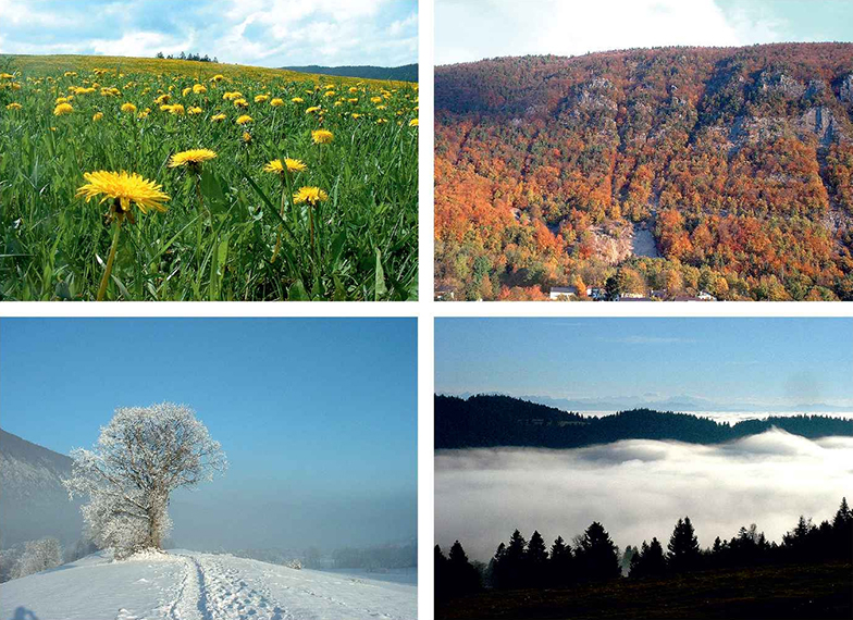 four pictures showing the four seasons: spring (yellow flowers on grass), summer (forest on a hill), fall (foggy valley) and winter (snow on a hilly landscape with a tree on the foreground)
